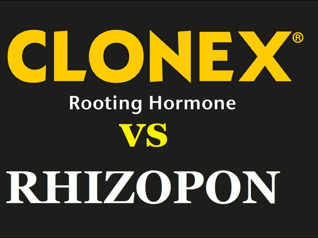 Клонекс или Ризопон ?