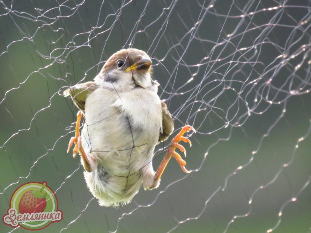 сетки от птиц все размеры купить