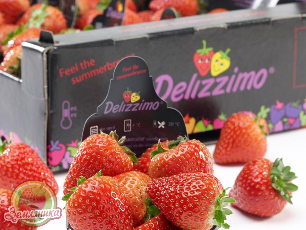 Купить саженцы клубники Delizzimo F1